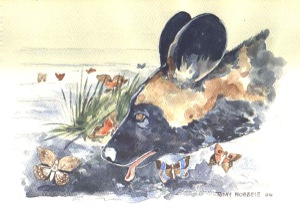 One of Tomy Ndebele's beautiful illustrations of painted dogs, commissioned for this project.