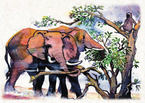elephants illustration