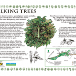 talking trees poster